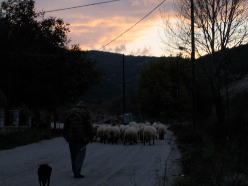 shepherd in kalavryta, greece